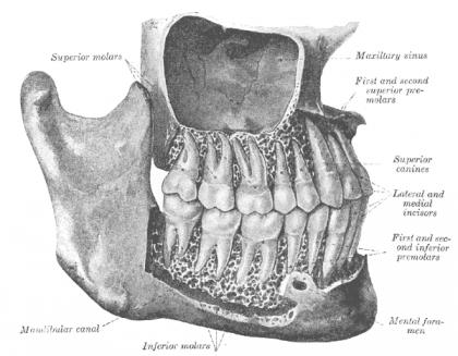 נזק עצבי בטיפולי שיניים
